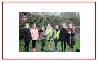 Y5 help plant 'Little Orchard'